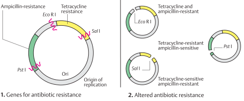 A plasmid vector for cloning