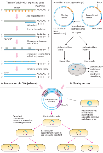 cDNA cloning principle