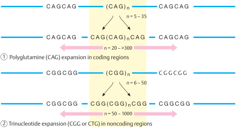 Different types of trinucleotide repeat expression